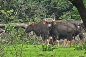 Goa Beach and wildlife Tour